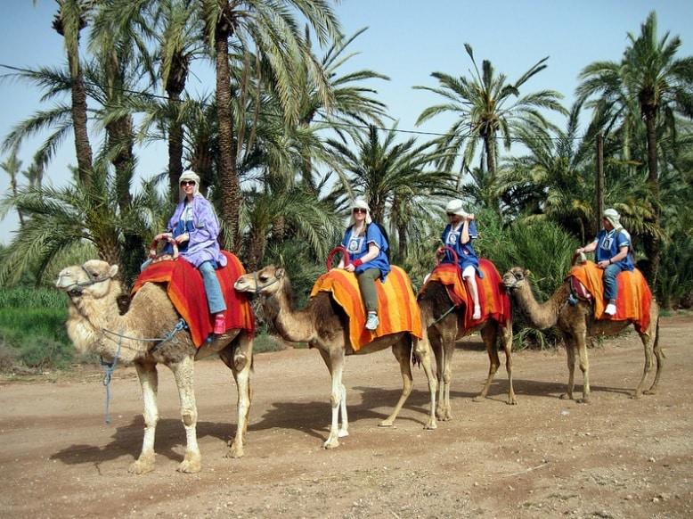 balade à dos de chameau Balade à dos de chameau 9dc489d2ce9f46229bdb250ed0ce307d
