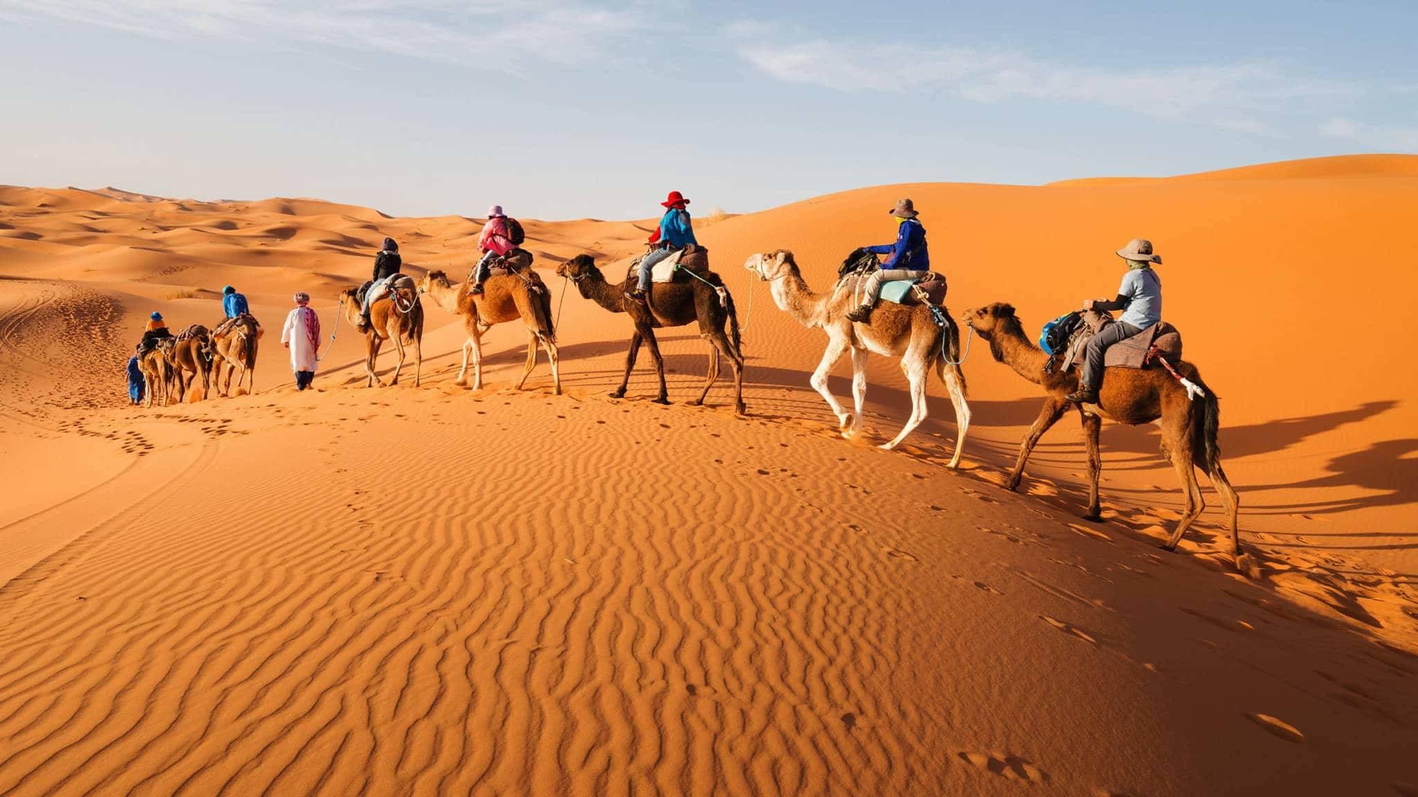 balade à dos de chameau Balade à dos de chameau El Sahara un desierto unico e1541182961551