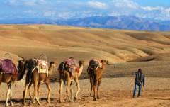 balade à dos de chameau Balade à dos de chameau c081ca3988c5445e812ed1b6318a7bad Camel caravane 240x151