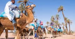 balade à dos de chameau Balade à dos de chameau tour desert 240x126